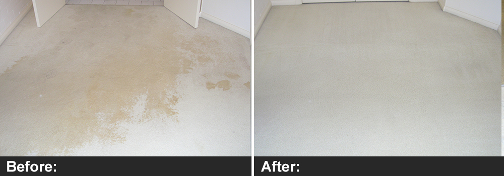 Carpet Flood Damage Restoration Berwick